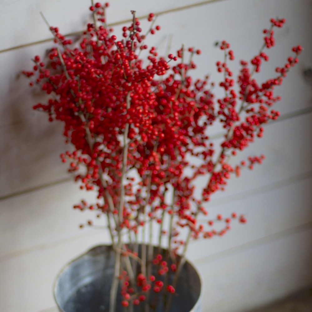 winterberry for evergreen containers