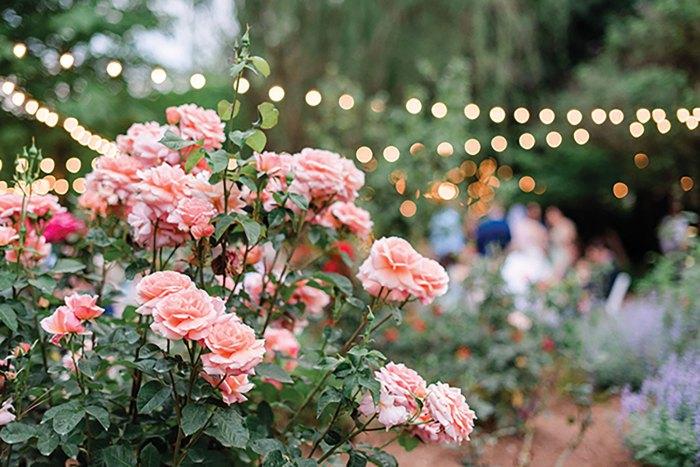 Charlotte Sightseeing, McGill Rose Garden