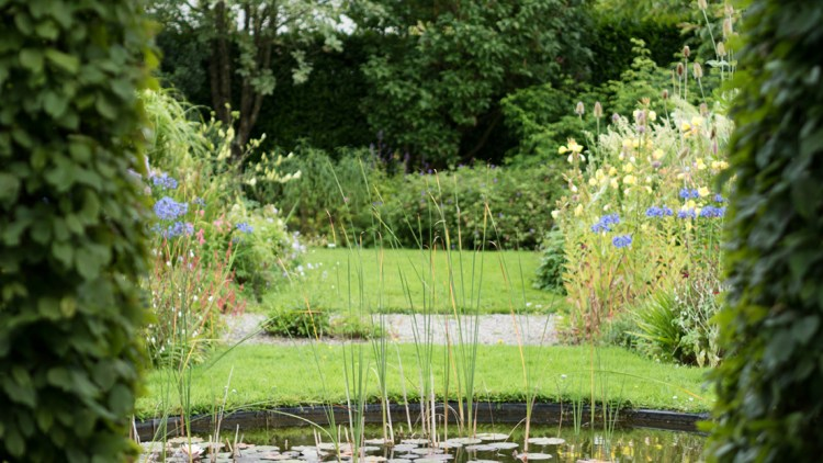 Photo of a pond filled with lily pads at Author Shackleton's home garden at Fruitlawn in Ireland