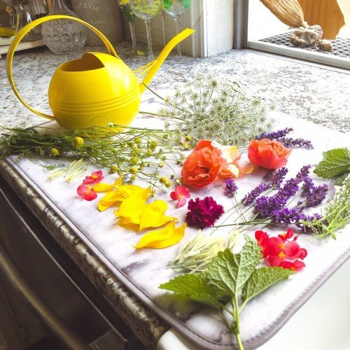Edible flowers ready for ice cubes. Photo via @dani_in_california and @magnolias_yarden on Instagram