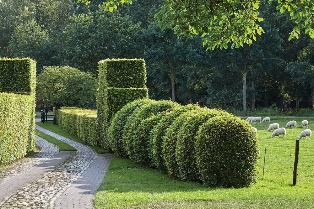 Piet Oudolf gardens, shaped hedges