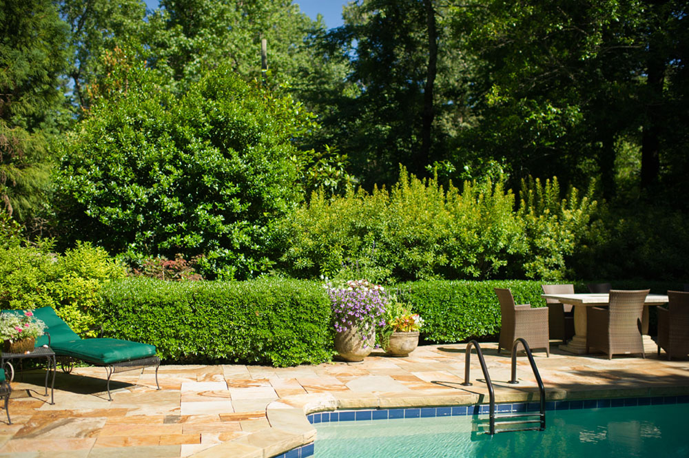 patio and pool bordered by an evergreen hedge