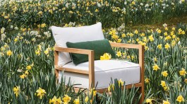 outdoor teak lounge chair in a field of blooming daffodils