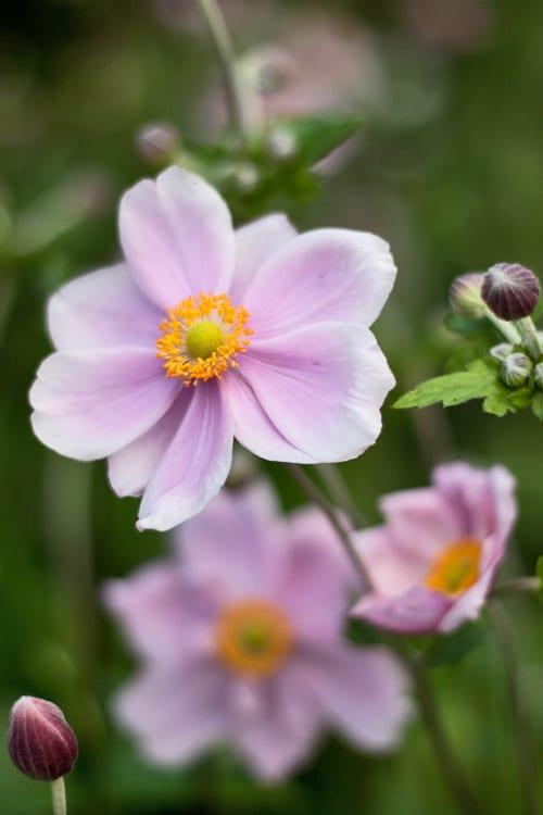 garden flowers dainty japanese