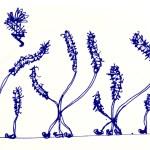 Flowerosity sketch #24