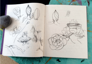 The Story of a Flower - branch flower and bud sketches