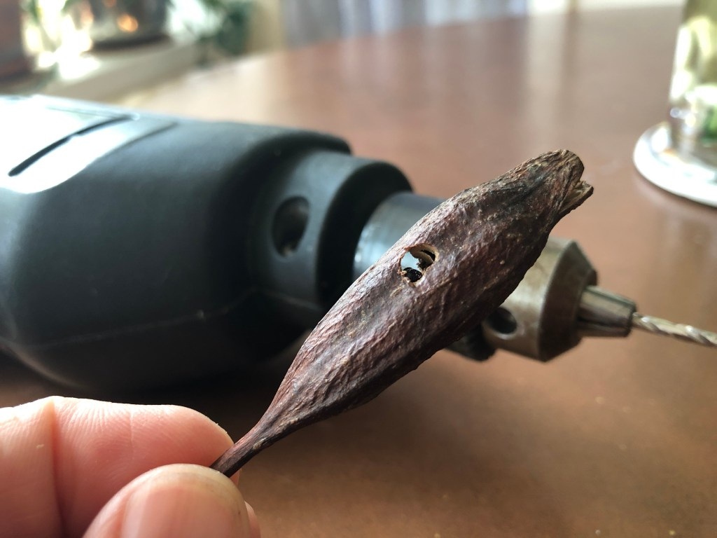 hole drilled into daylily seed head pods