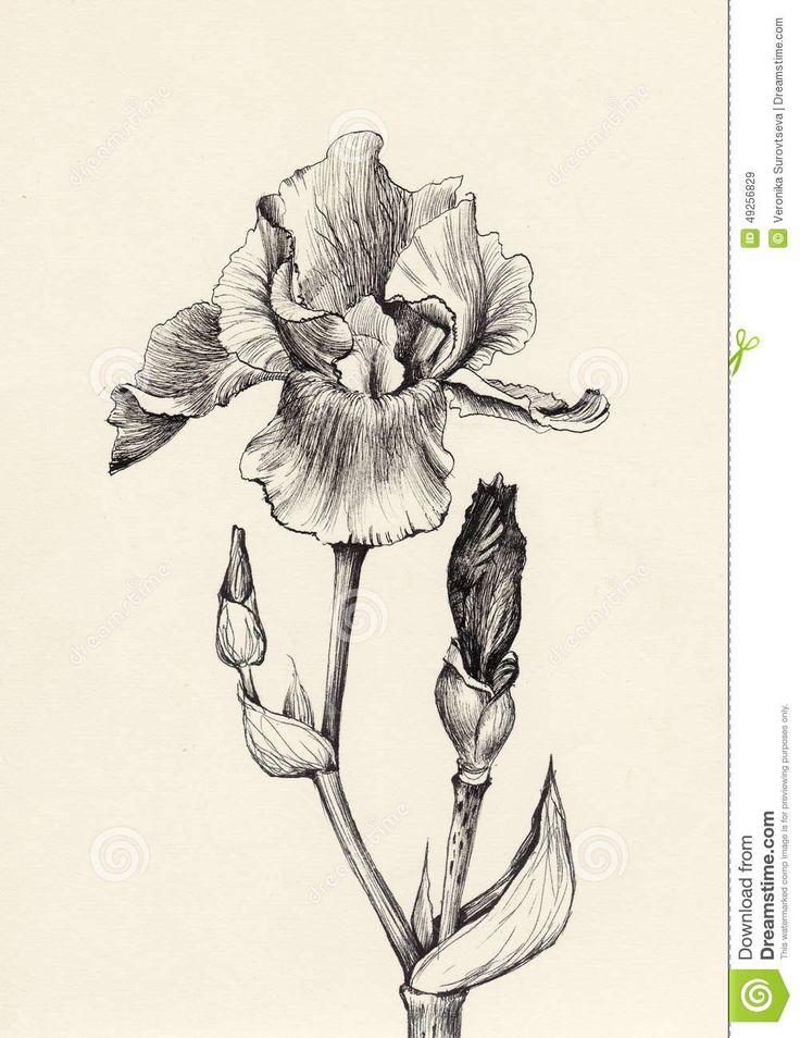 Easy Marigold Flower Drawings