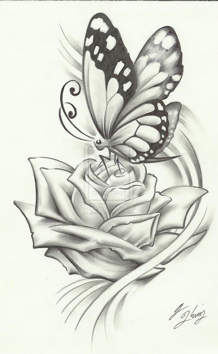 Pencil Drawings Of Flowers And Butterflies : pencil, drawings, flowers, butterflies, Pictures, Flowers, Butterflies, Wallpapers, Quality