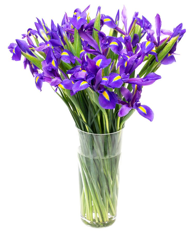 Blue Iris Flowers Delivered  Flowers By Flourish