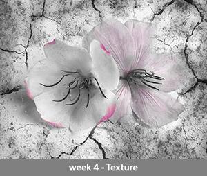 Tibouchina week 4