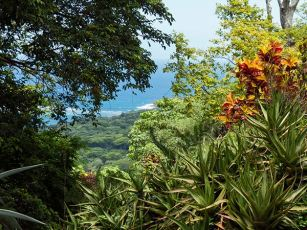 177-Summit-Garden-view-down
