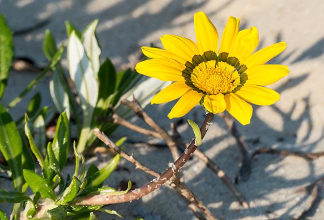 May: Wild Flowers – Seaside