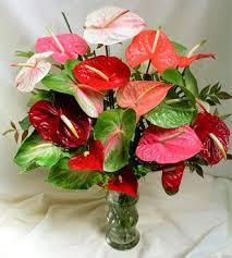 anthurium-bouquet