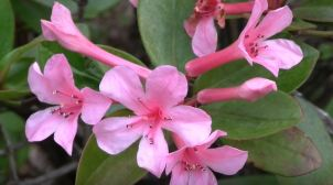 best winter flowering plants