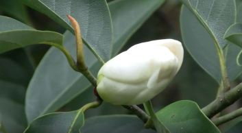 california winter flowering plants