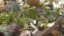 exoctic plants
