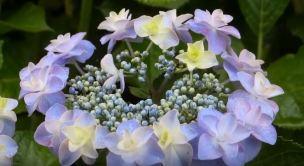 flowering plants for birthday