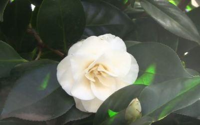 winter flowering plants uk