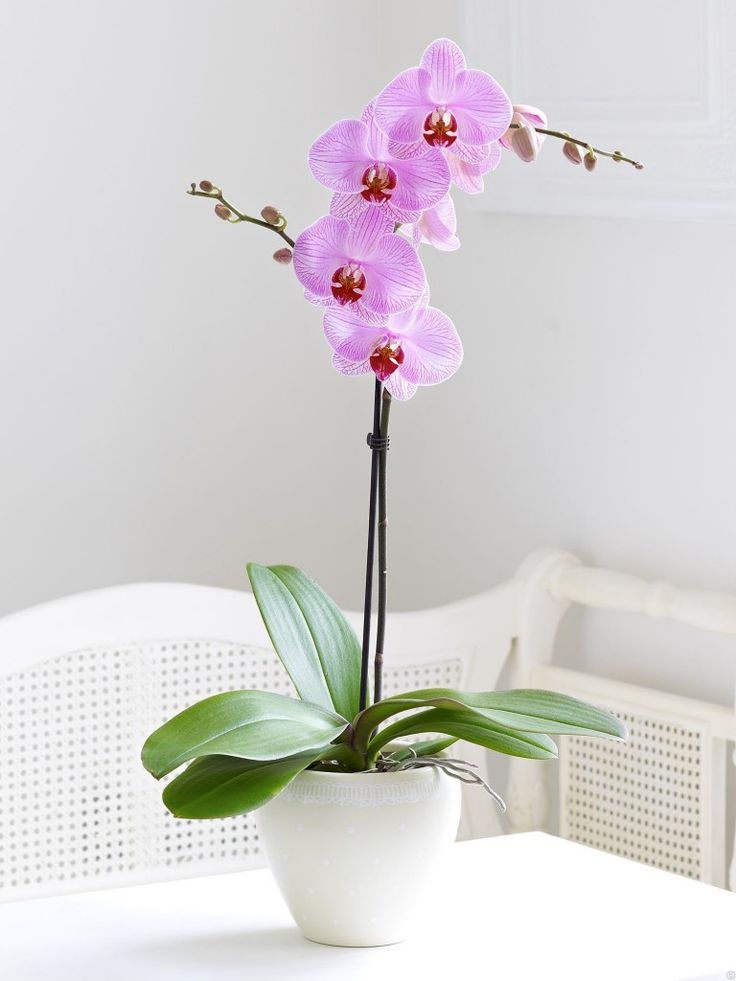 care-of-indoor-orchids