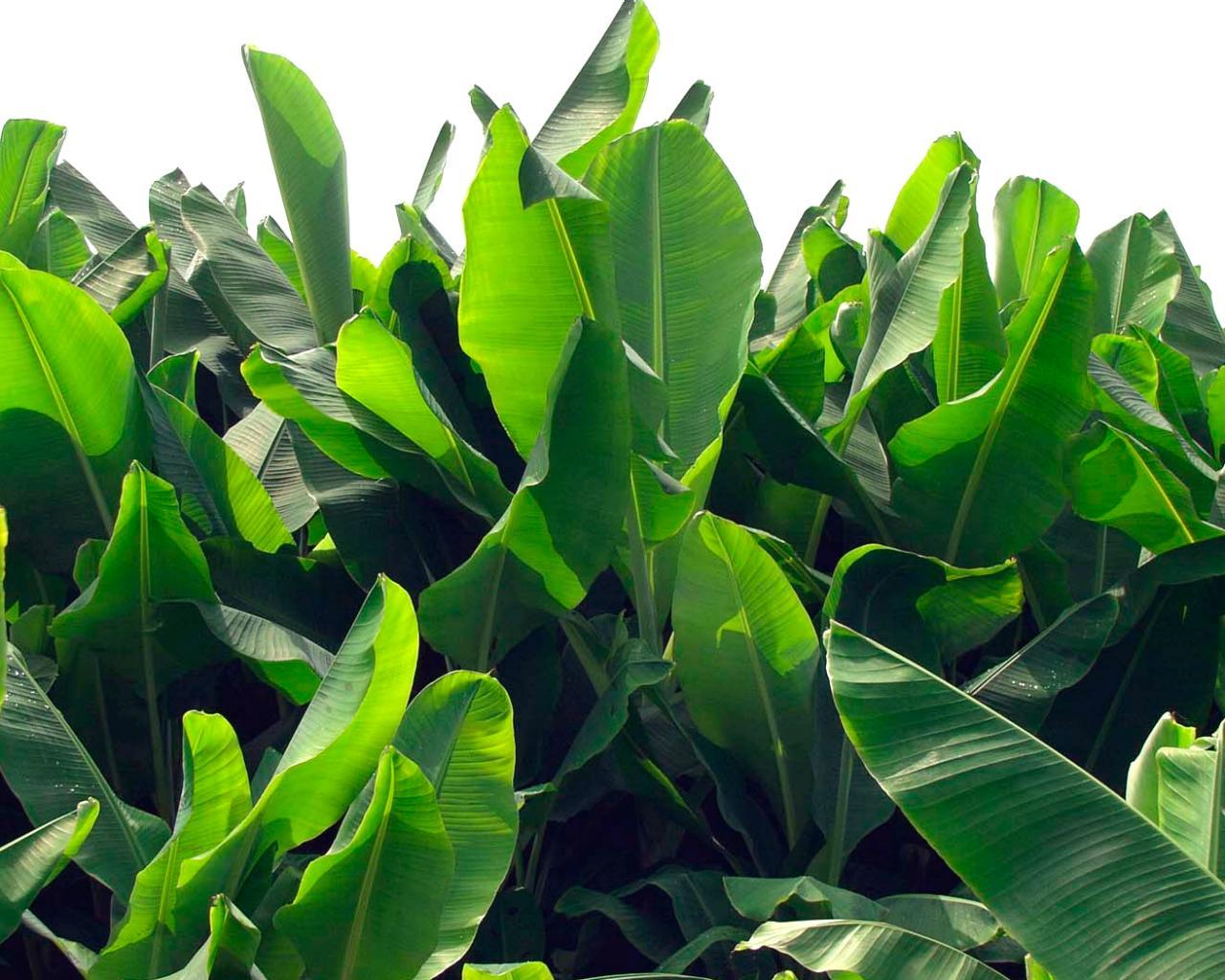 exotic-plant