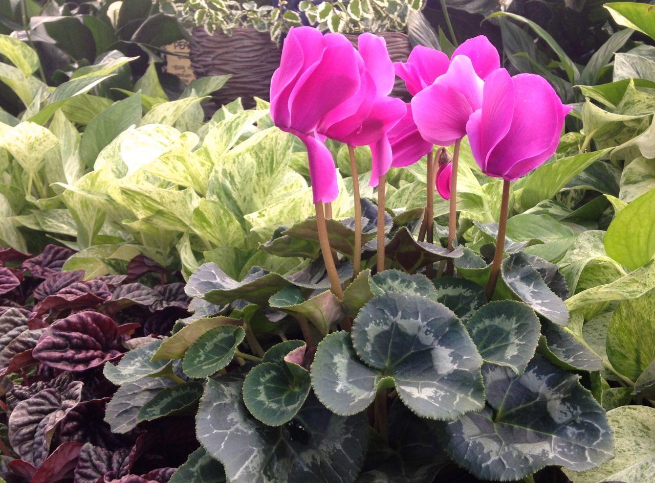 flowers-in-winter