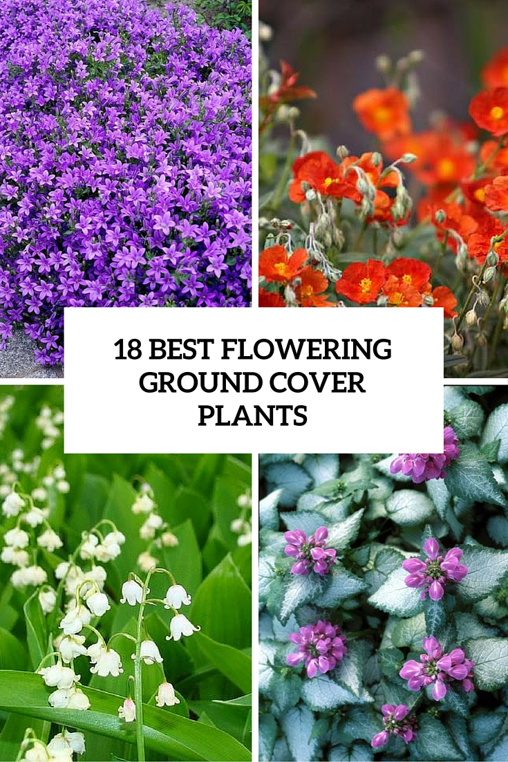 ground-coverage-plants