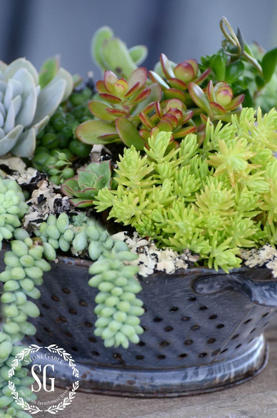 how-to-plant-succulents