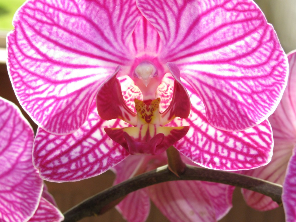 indoor-orchid-care-for-beginners