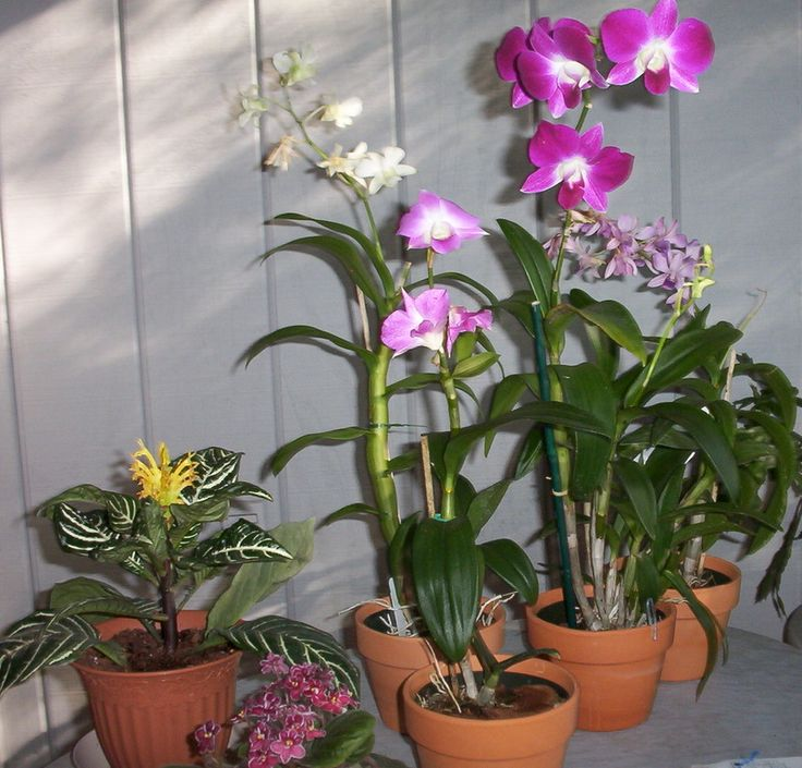 indoor-orchid-garden