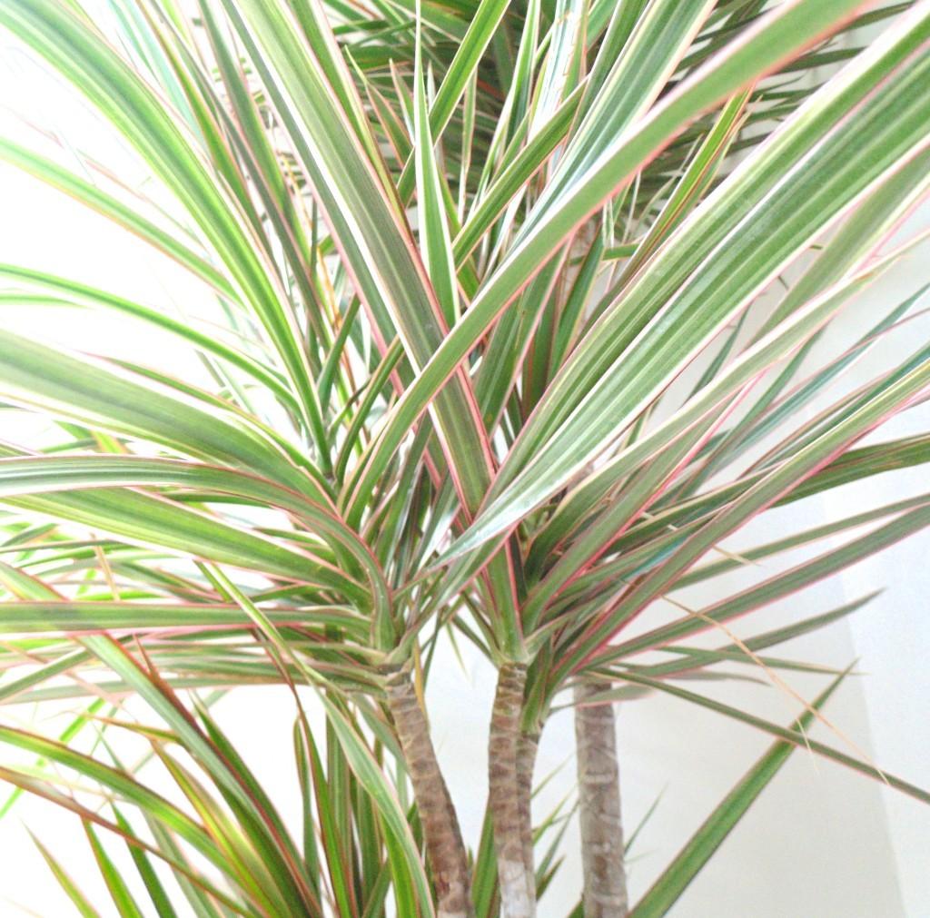 indoor-plant-benefits