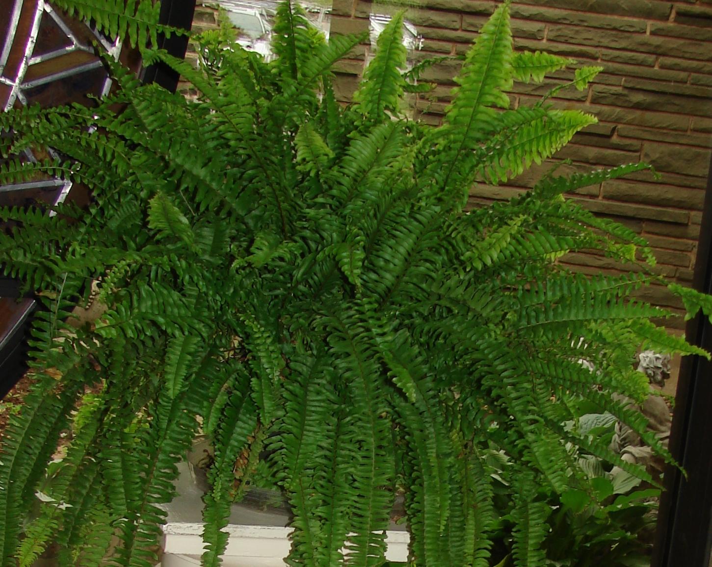 indoor-plant-clean-air