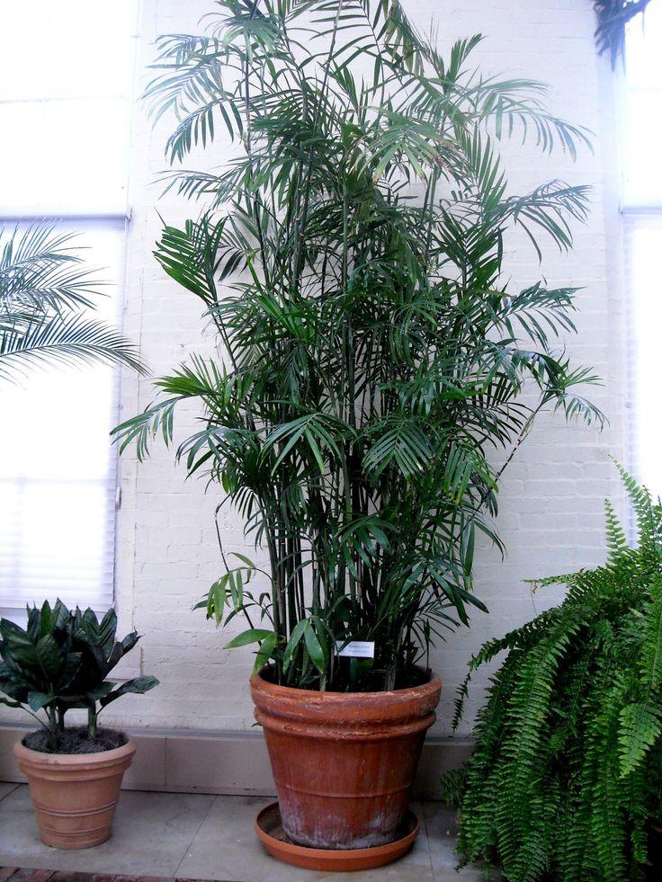 indoor-plants-to-clean-air