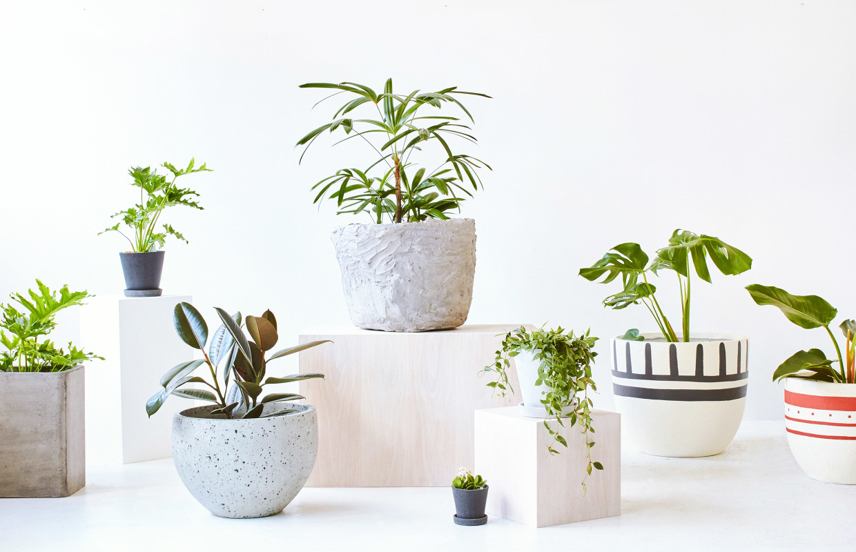 indoors-flowers