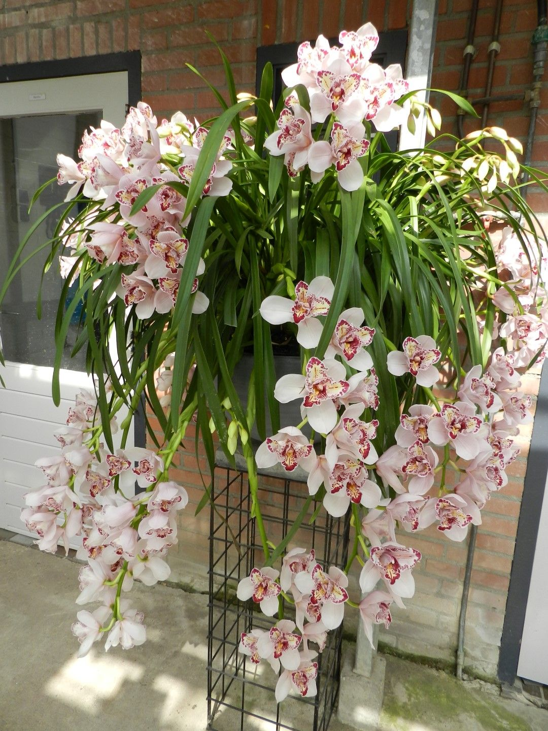 orchid-flowers-care