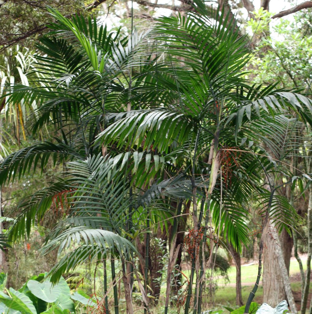 plant-that-clean-air