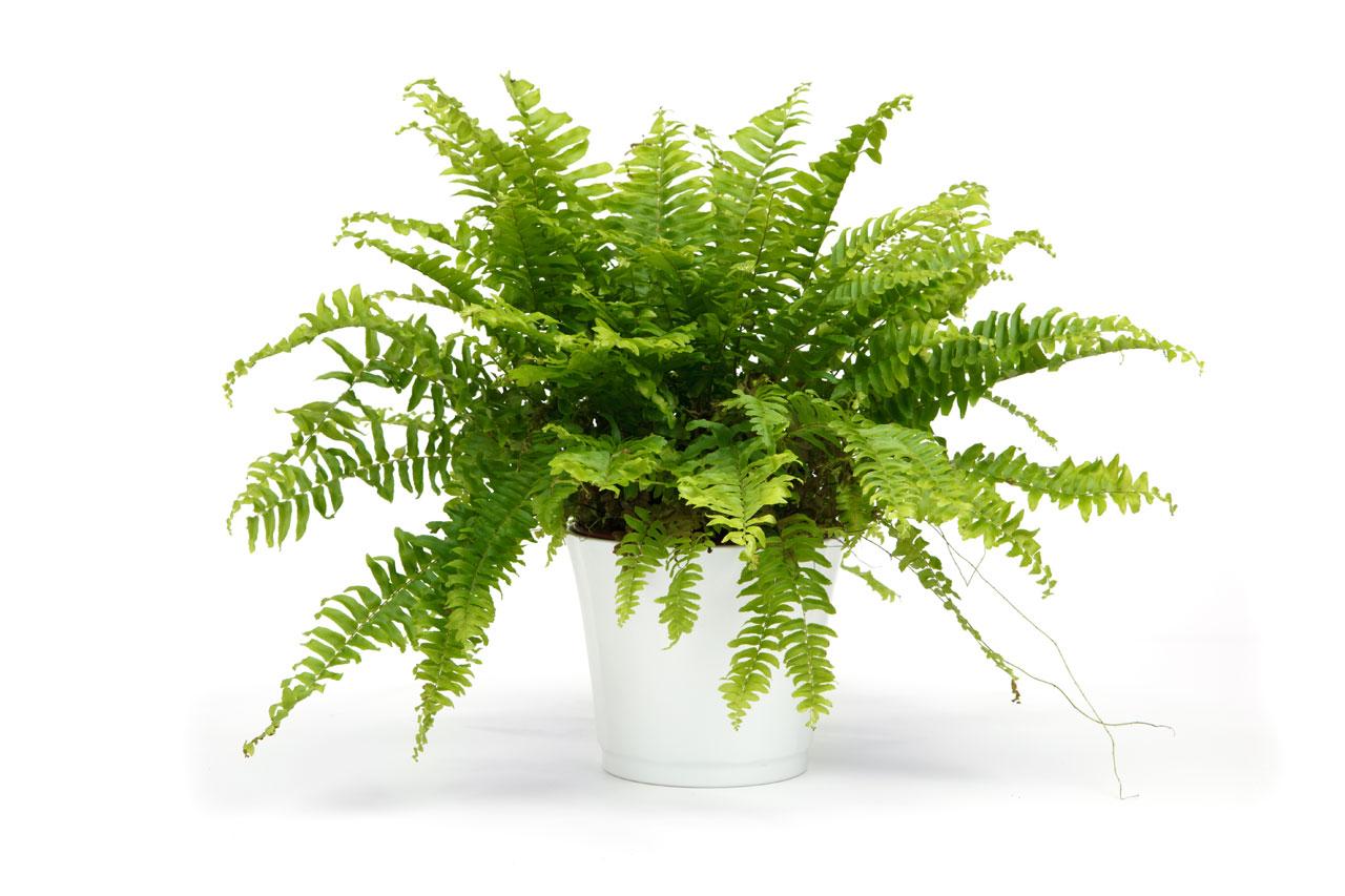 plant-that-clean-the-air