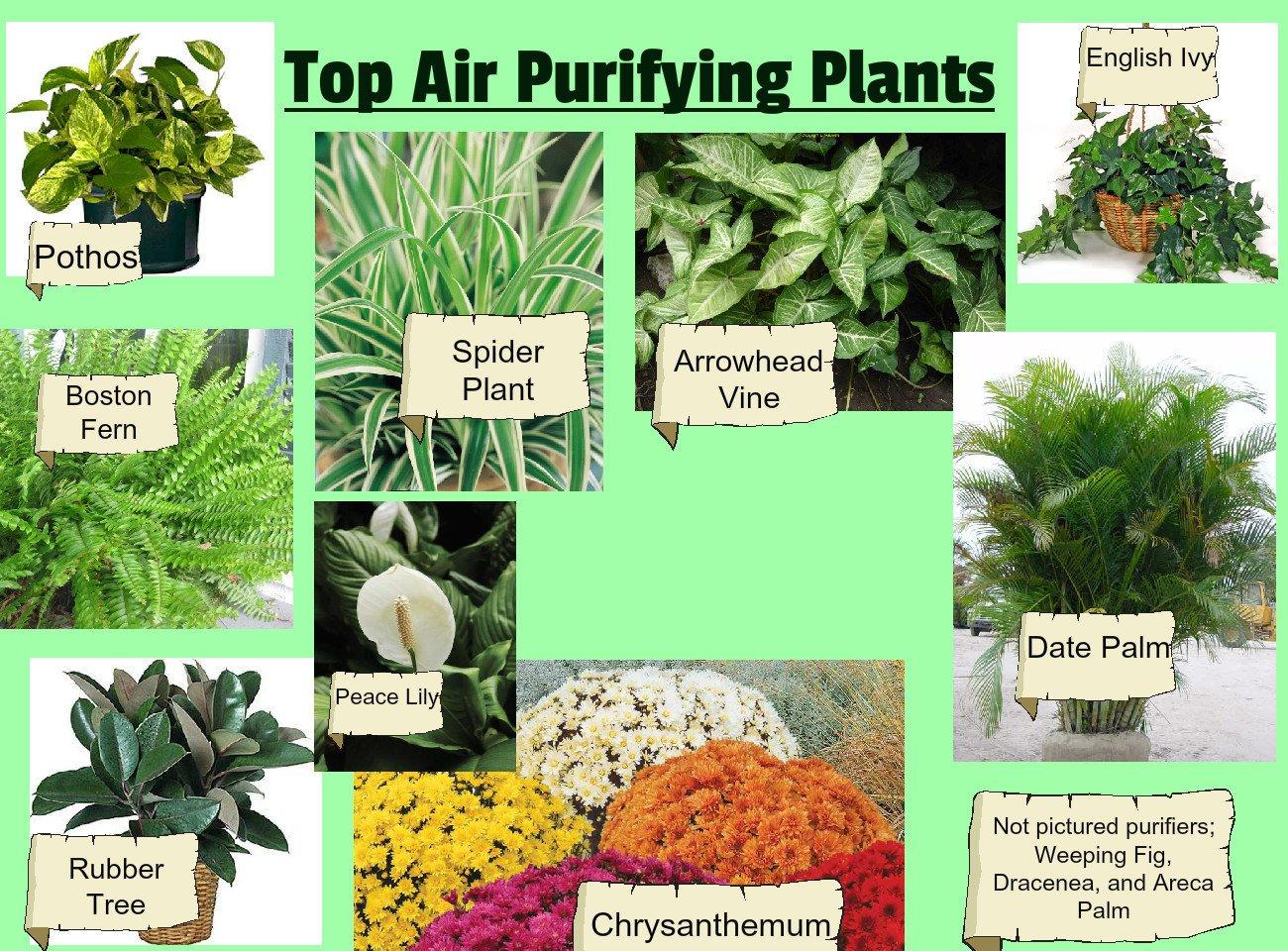 plants-to-clean-air