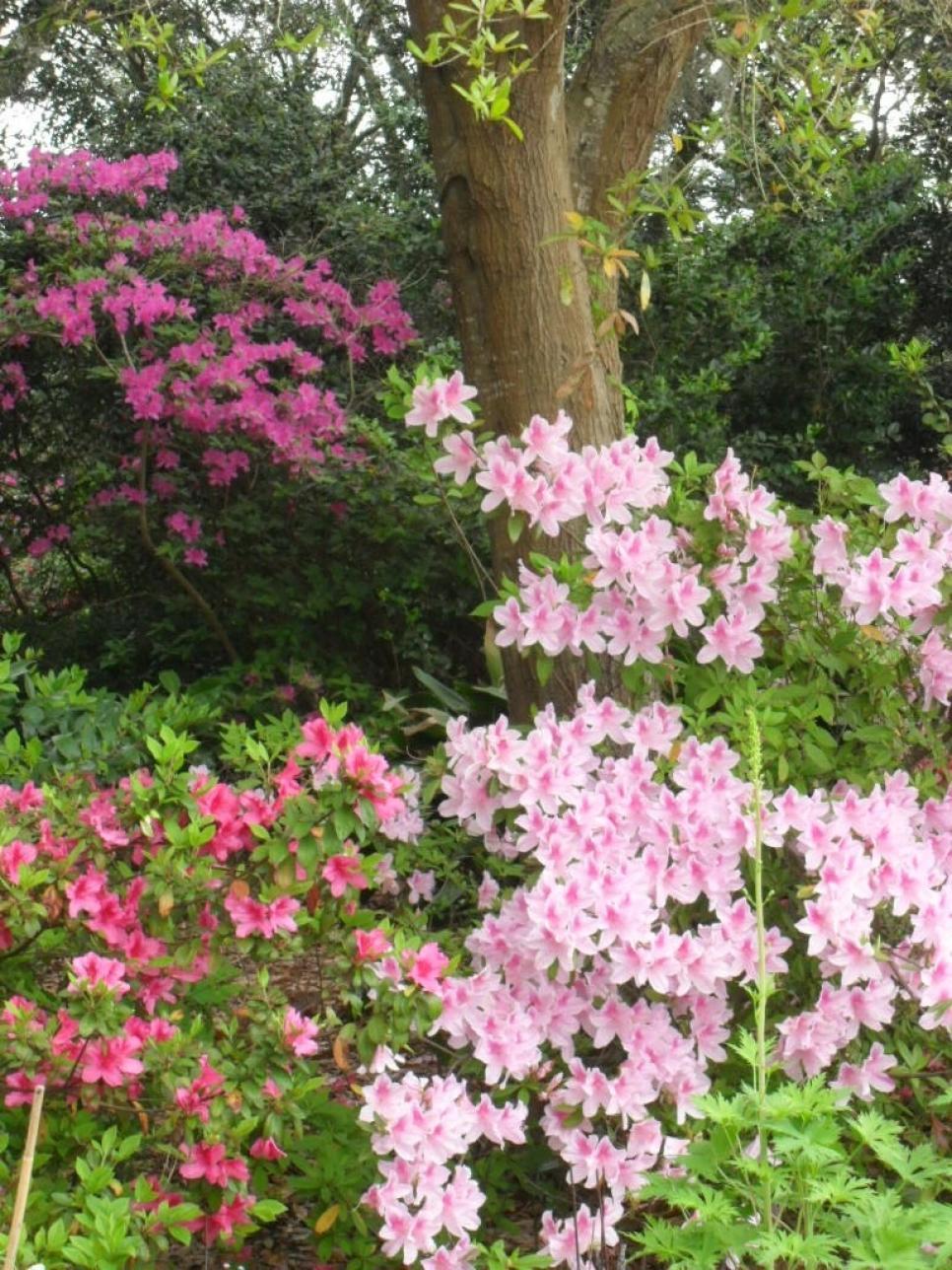 shade-bushes