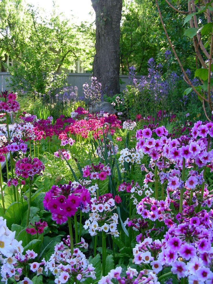 shade-loving-perennials