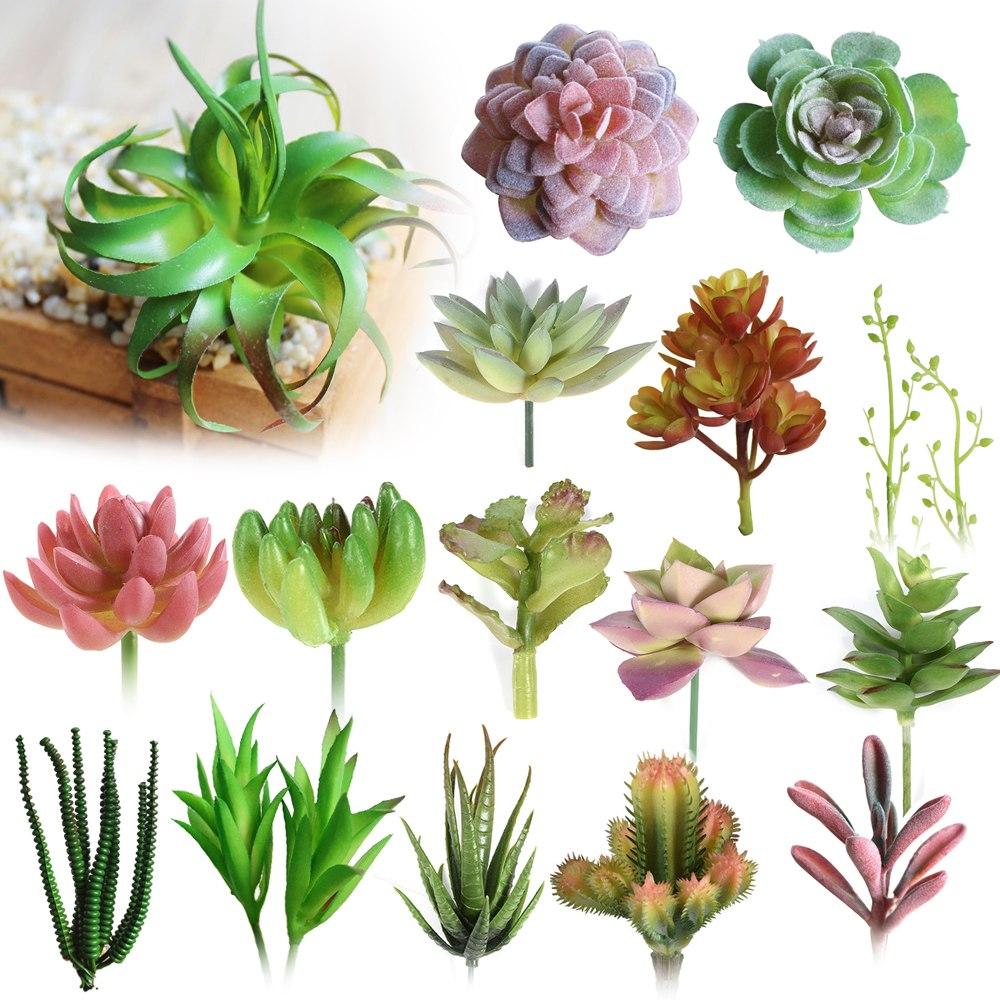 succulent-bushes