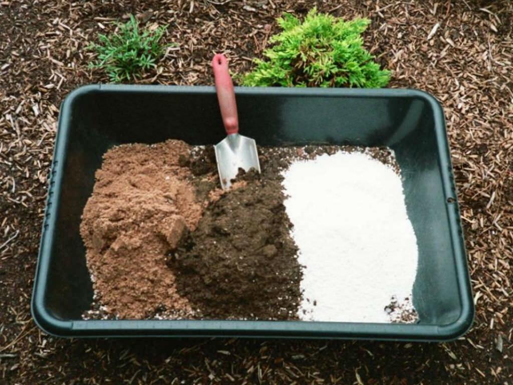 succulent-plant-soil