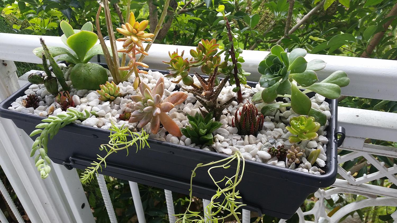 succulents-&-cacti