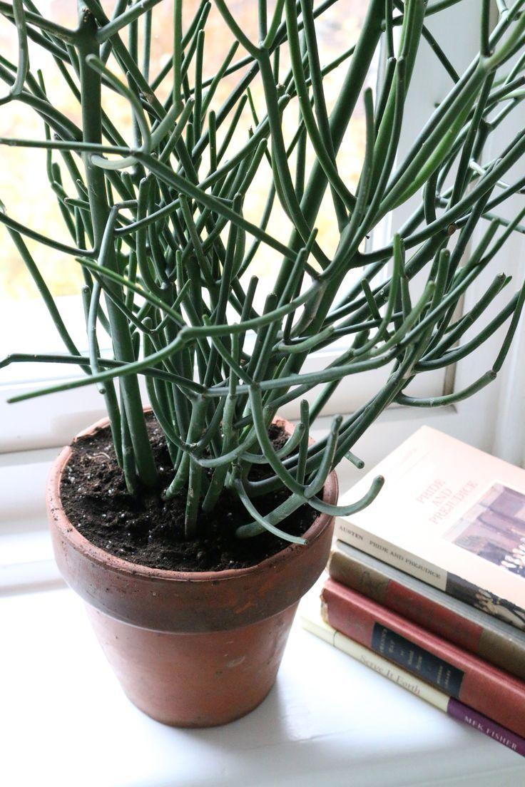 succulents-cacti