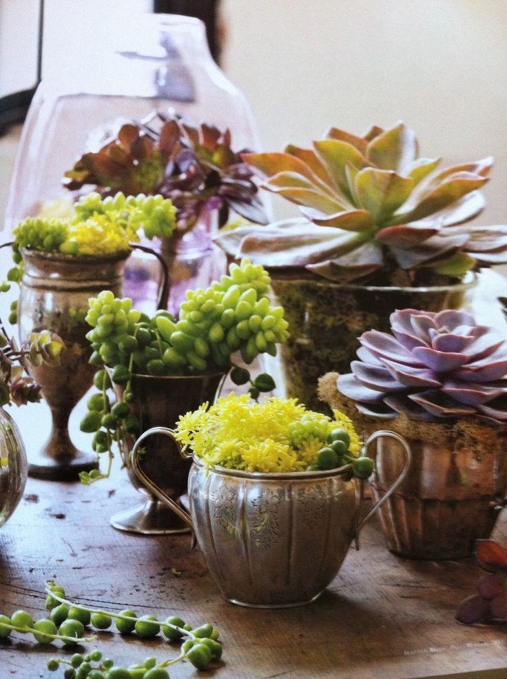 succulents-indoors