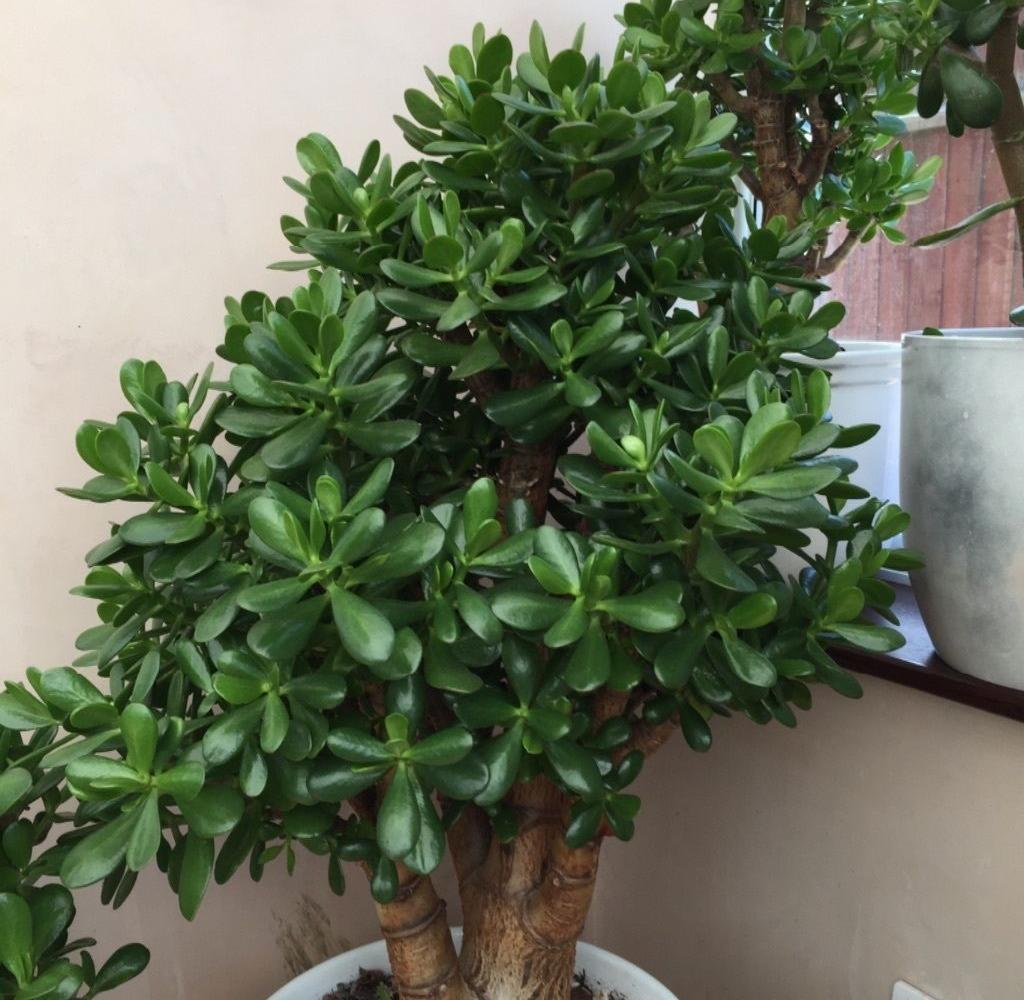 tall-succulent-plants
