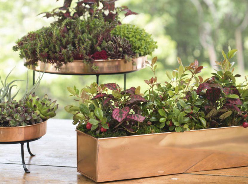 the-benefits-of-indoor-plants