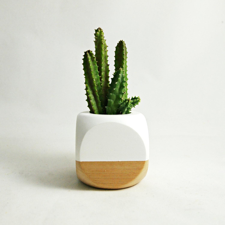 tiny-cactus-plant