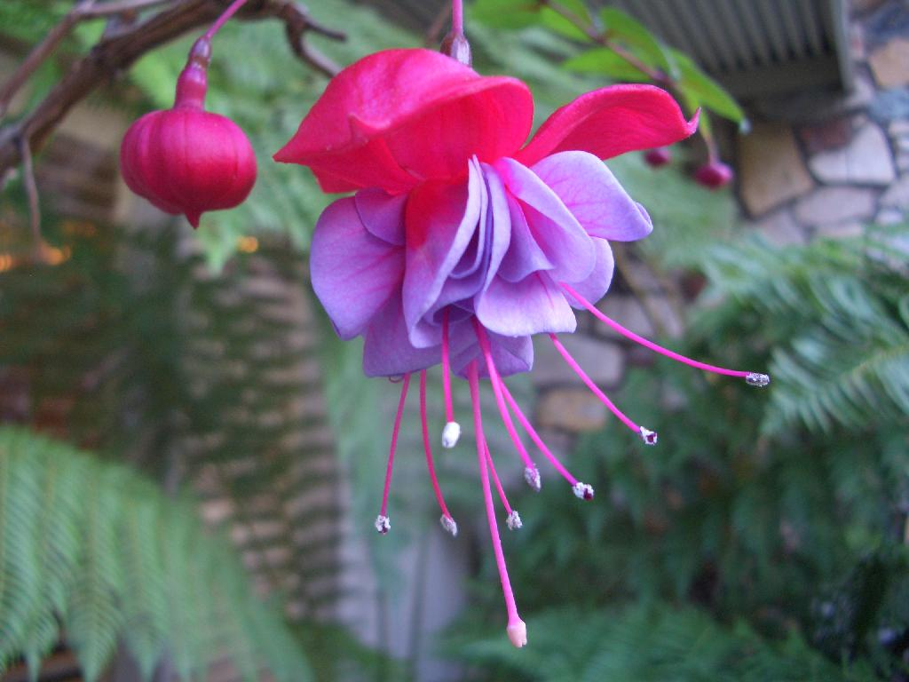 tropical-flowers-and-plants