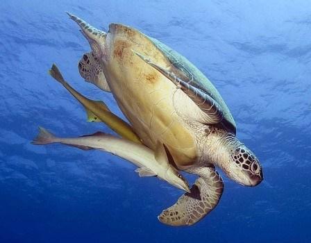 Sea World North Sulawesi